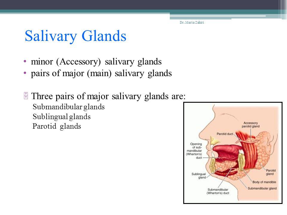 Salivary Glands minor (Accessory) salivary glands pairs of major (main) salivary glands  Three pairs of major salivary glands are: Submandibular glan