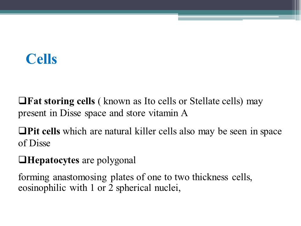  Fat storing cells ( known as Ito cells or Stellate cells) may present in Disse space and store vitamin A  Pit cells which are natural killer cells