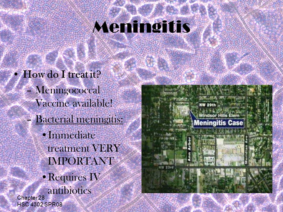 Chapter 28 HSC 4302 SPR08 Meningitis What are the symptoms.