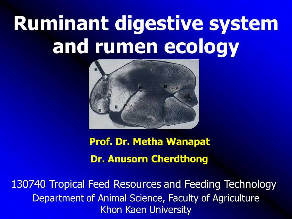Ruminant digestive system and rumen ecology Department of Animal Science, Faculty of Agriculture Khon Kaen University Prof. Dr. Metha Wanapat Dr. Anus