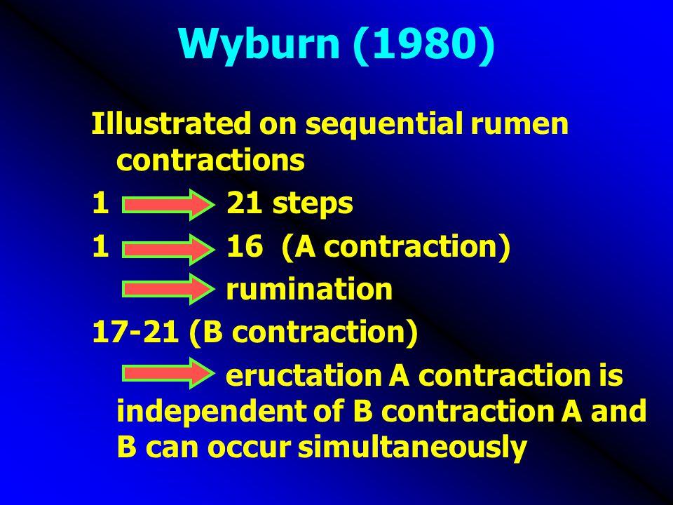 Wyburn (1980) Illustrated on sequential rumen contractions 121 steps 116 (A contraction) rumination 17-21 (B contraction) eructation A contraction is