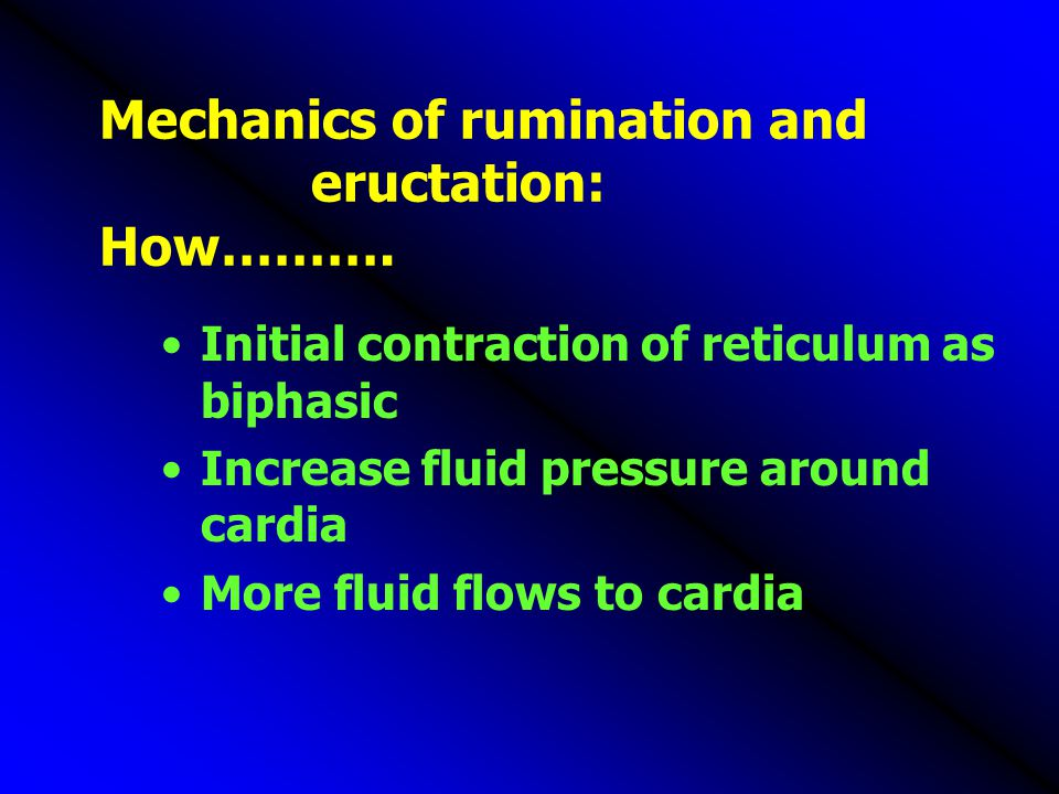 Mechanics of rumination and eructation: How………. Initial contraction of reticulum as biphasic Increase fluid pressure around cardia More fluid flows to