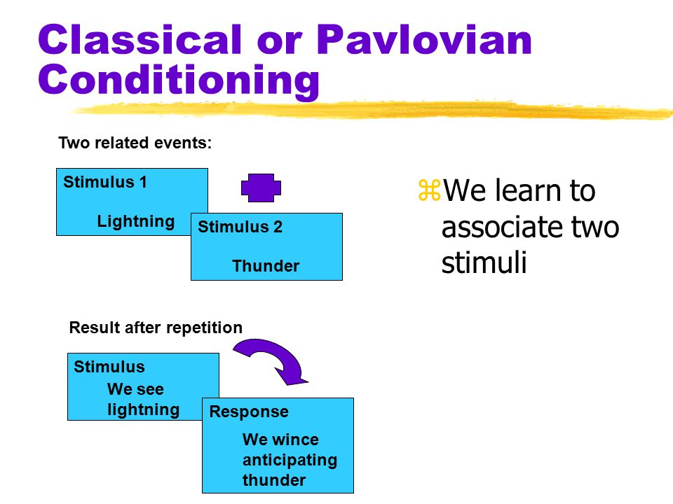 Classical or Pavlovian Conditioning zWe learn to associate two stimuli Two related events: Lightning Stimulus 1 Thunder Stimulus 2 Result after repetition We see lightning Stimulus We wince anticipating thunder Response
