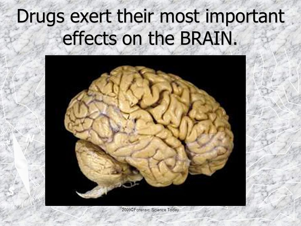 Drugs exert their most important effects on the BRAIN. 2009©Forensic Science Today