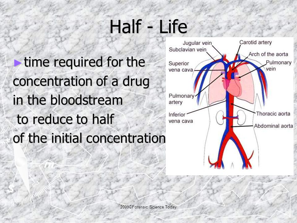 Half - Life ► time required for the concentration of a drug in the bloodstream to reduce to half to reduce to half of the initial concentration 2009©Forensic Science Today