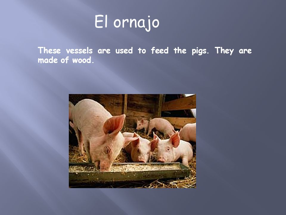 These vessels are used to feed the pigs. They are made of wood. El ornajo