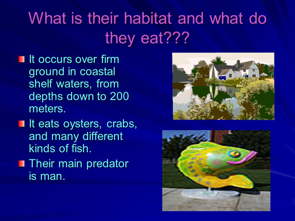 What is their habitat and what do they eat??.