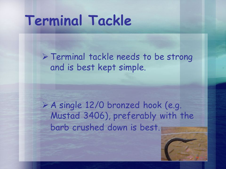 Terminal Tackle  Terminal tackle needs to be strong and is best kept simple.  A single 12/0 bronzed hook (e.g. Mustad 3406), preferably with the bar