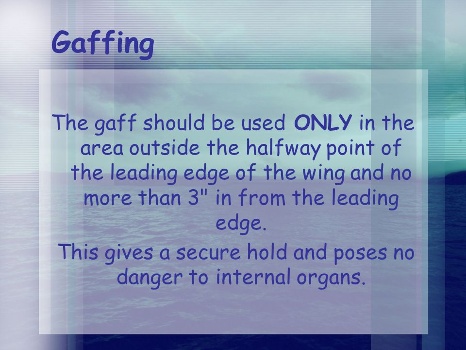 Gaffing The gaff should be used ONLY in the area outside the halfway point of the leading edge of the wing and no more than 3