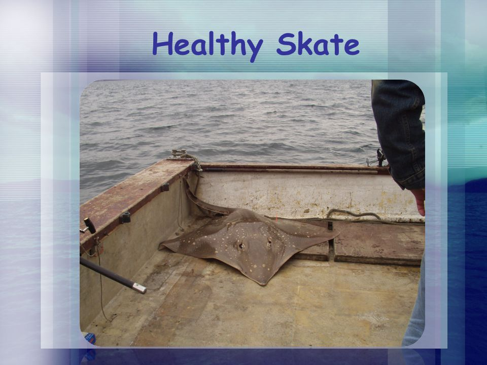 Healthy Skate