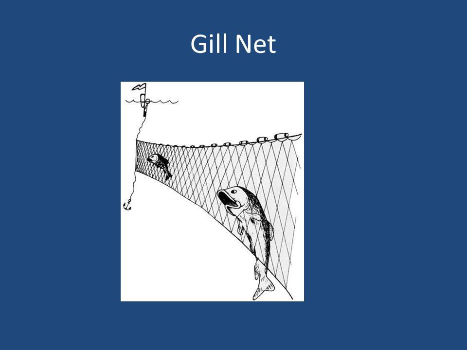 Gill Net