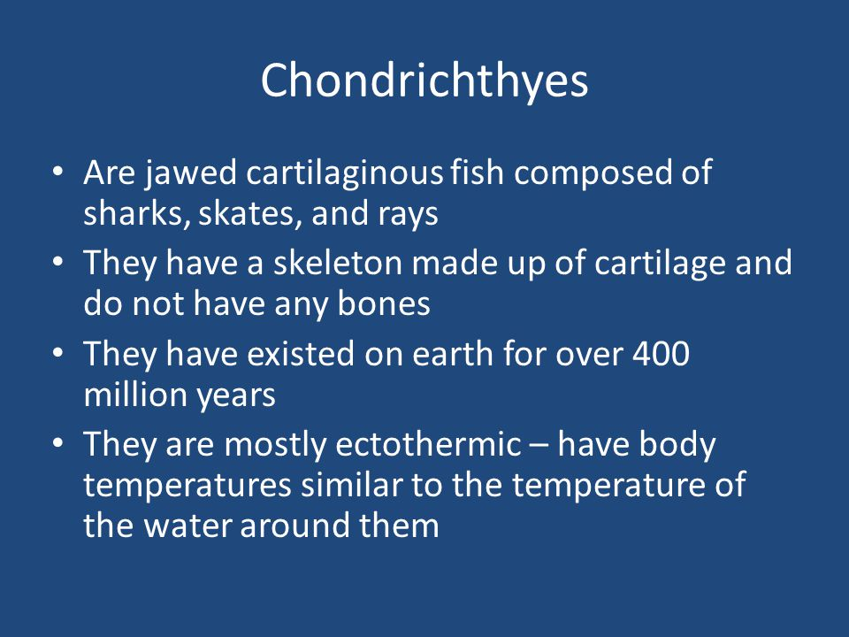 Chondrichthyes Are jawed cartilaginous fish composed of sharks, skates, and rays They have a skeleton made up of cartilage and do not have any bones They have existed on earth for over 400 million years They are mostly ectothermic – have body temperatures similar to the temperature of the water around them