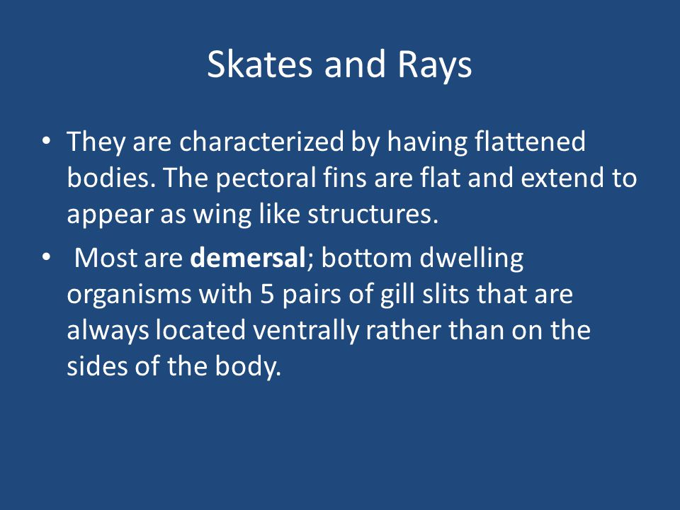 Skates and Rays They are characterized by having flattened bodies.