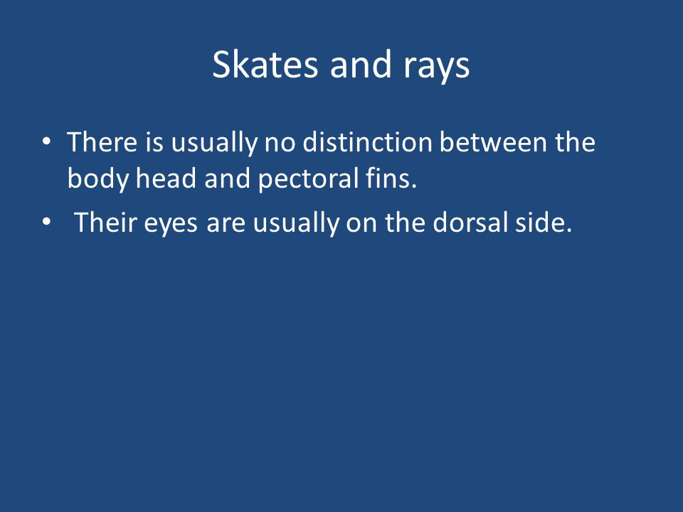 Skates and rays There is usually no distinction between the body head and pectoral fins.
