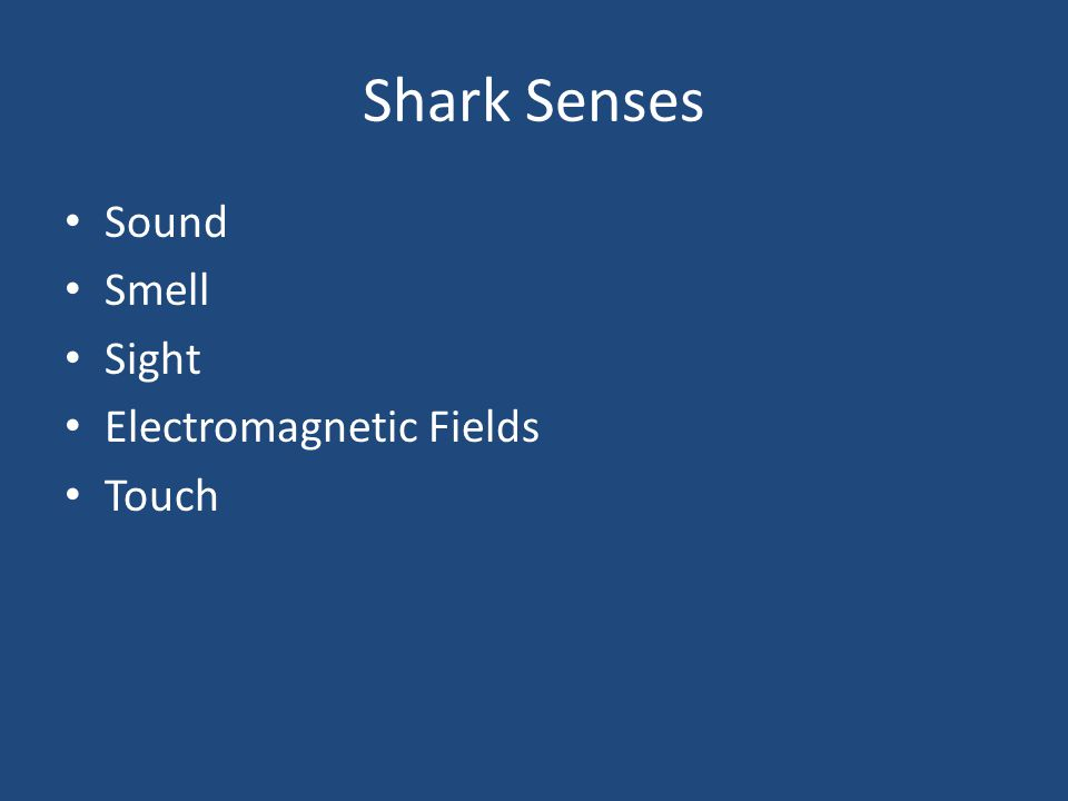 Shark Senses Sound Smell Sight Electromagnetic Fields Touch