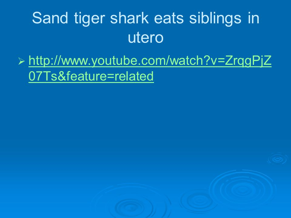 Sand tiger shark eats siblings in utero   http://www.youtube.com/watch v=ZrqgPjZ 07Ts&feature=related http://www.youtube.com/watch v=ZrqgPjZ 07Ts&feature=related