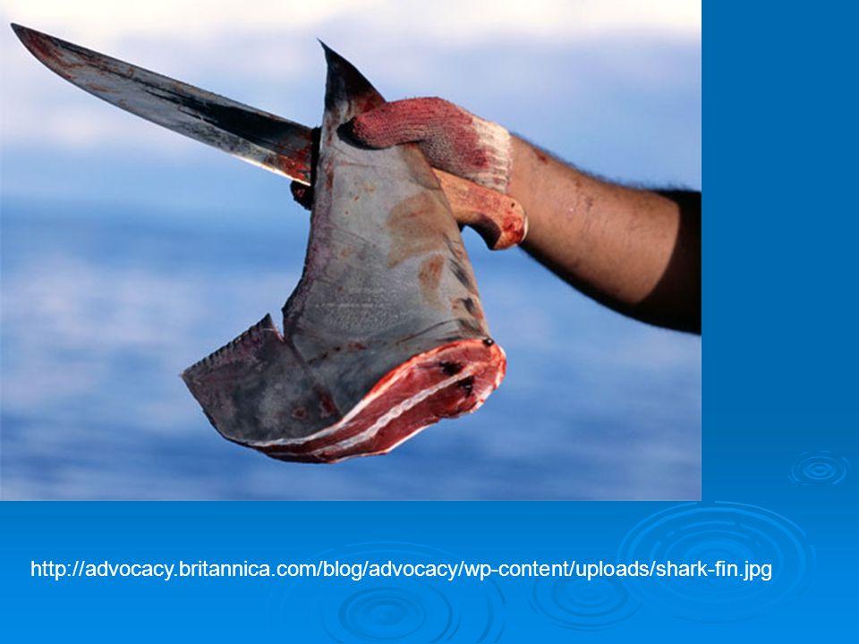 http://advocacy.britannica.com/blog/advocacy/wp-content/uploads/shark-fin.jpg