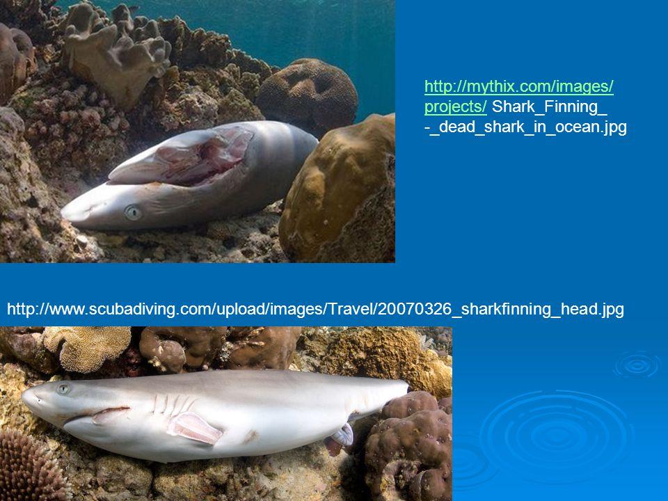 http://mythix.com/images/ projects/projects/ Shark_Finning_ -_dead_shark_in_ocean.jpg http://www.scubadiving.com/upload/images/Travel/20070326_sharkfinning_head.jpg