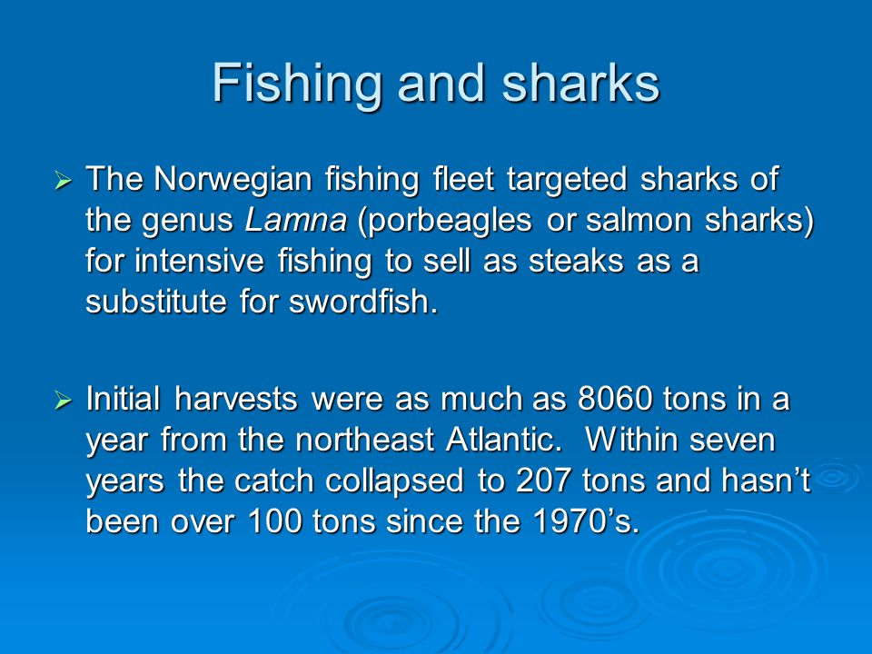 Fishing and sharks  The Norwegian fishing fleet targeted sharks of the genus Lamna (porbeagles or salmon sharks) for intensive fishing to sell as steaks as a substitute for swordfish.
