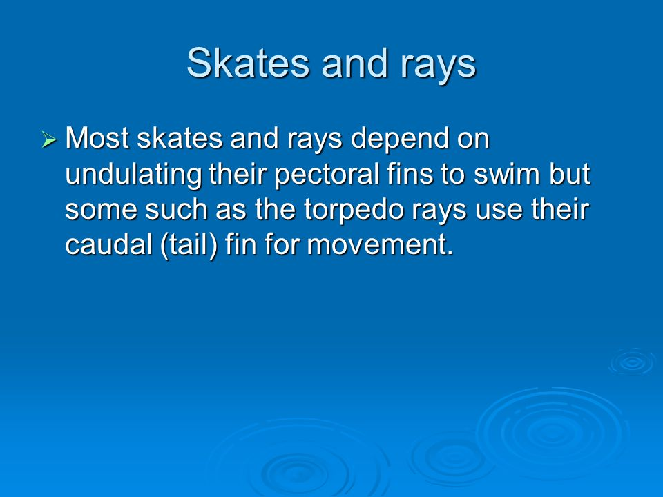 Skates and rays  Most skates and rays depend on undulating their pectoral fins to swim but some such as the torpedo rays use their caudal (tail) fin for movement.