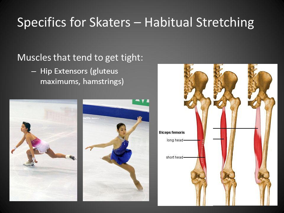 Muscles that tend to get tight: – Hip Extensors (gluteus maximums, hamstrings) Specifics for Skaters – Habitual Stretching