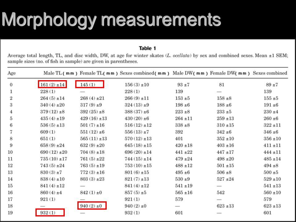Morphology measurements (mm)