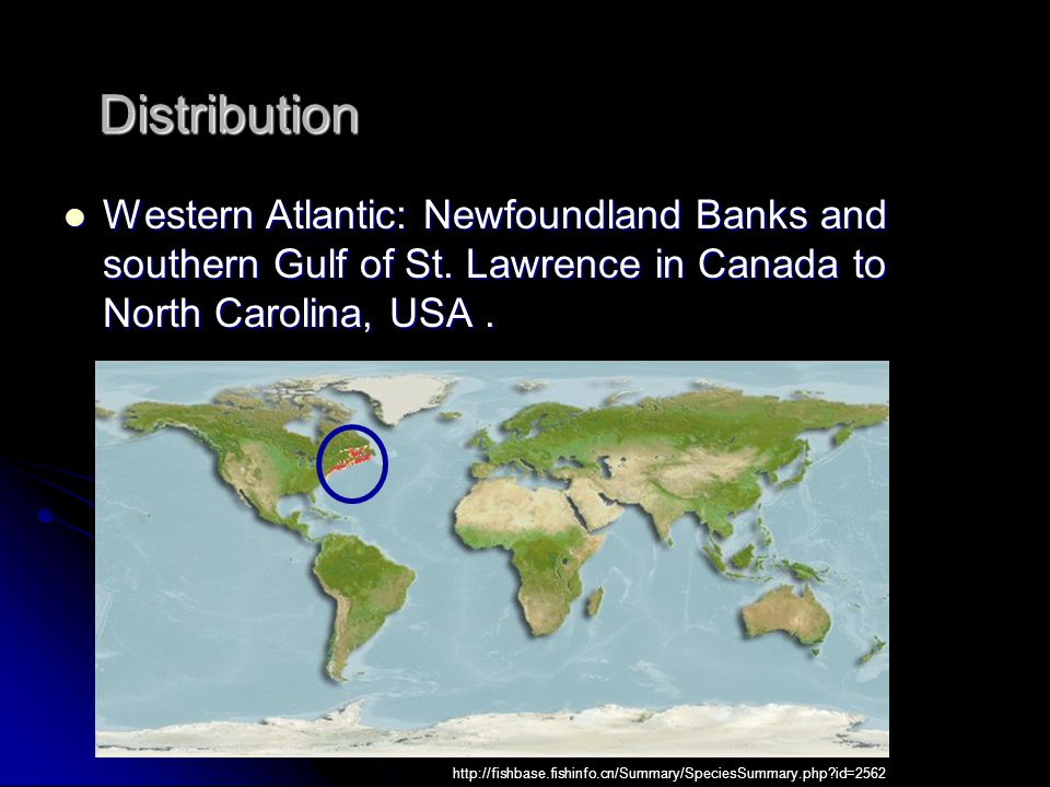 Distribution Western Atlantic: Newfoundland Banks and southern Gulf of St.