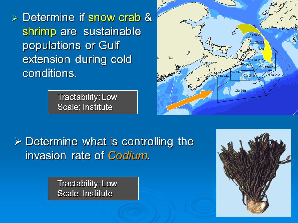  Determine if snow crab & shrimp are sustainable populations or Gulf extension during cold conditions.