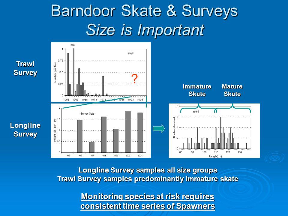 Barndoor Skate & Surveys Size is Important Trawl Survey Longline Survey Mature Skate Immature Skate .