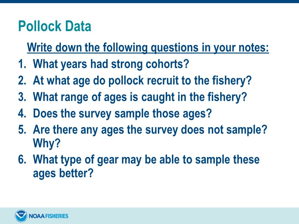Pollock Data Write down the following questions in your notes: 1.What years had strong cohorts? 2.At what age do pollock recruit to the fishery? 3.Wha