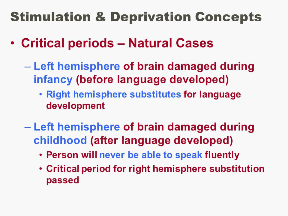 Stimulation & Deprivation Concepts Critical periods – Natural Cases –Left hemisphere of brain damaged during infancy (before language developed) Right hemisphere substitutes for language development –Left hemisphere of brain damaged during childhood (after language developed) Person will never be able to speak fluently Critical period for right hemisphere substitution passed