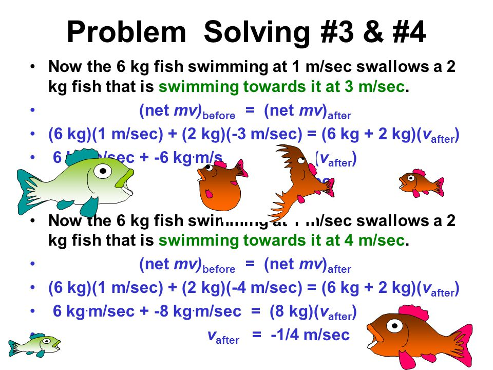 Problem Solving #2 Now the 6 kg fish swimming at 1 m/sec swallows a 2 kg fish that is swimming towards it at 2 m/sec.