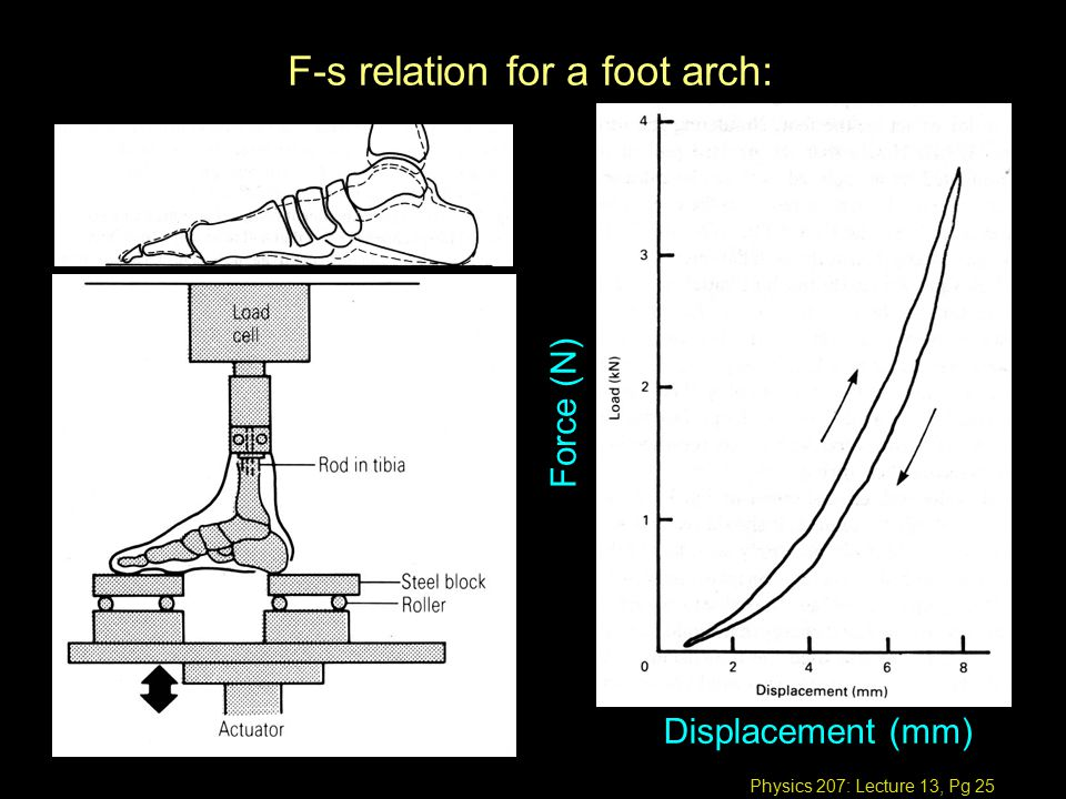 Physics 207: Lecture 13, Pg 25 F-s relation for a foot arch: Force (N) Displacement (mm)