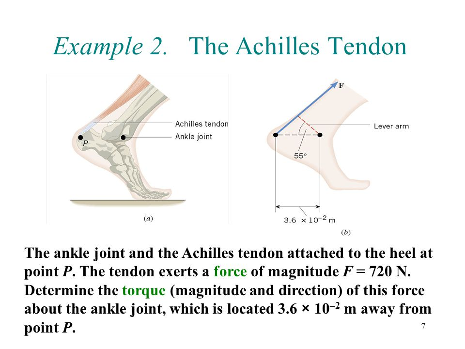 8 = (3.6 × 10 –2 m) cos 55° The force F tends to produce a clockwise rotation about the ankle joint, so the torque is negative: