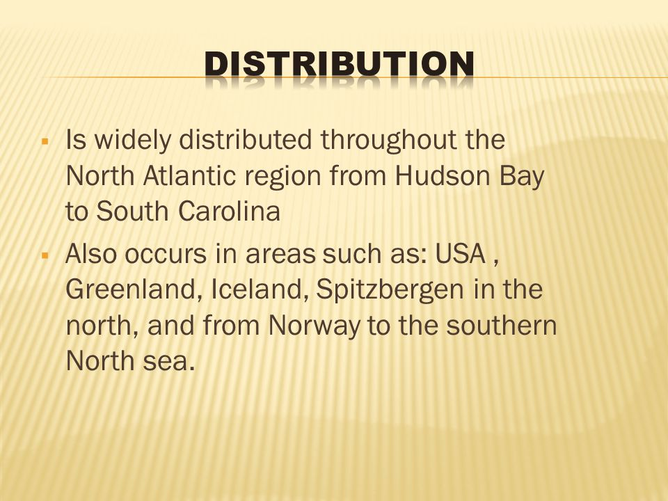  Is widely distributed throughout the North Atlantic region from Hudson Bay to South Carolina  Also occurs in areas such as: USA, Greenland, Iceland