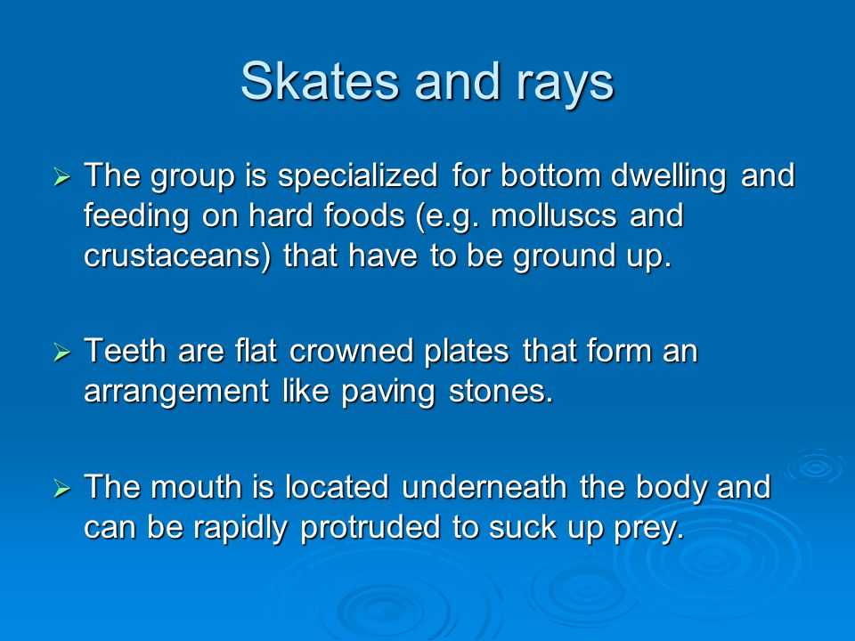 Skates and rays  The group is specialized for bottom dwelling and feeding on hard foods (e.g. molluscs and crustaceans) that have to be ground up. 