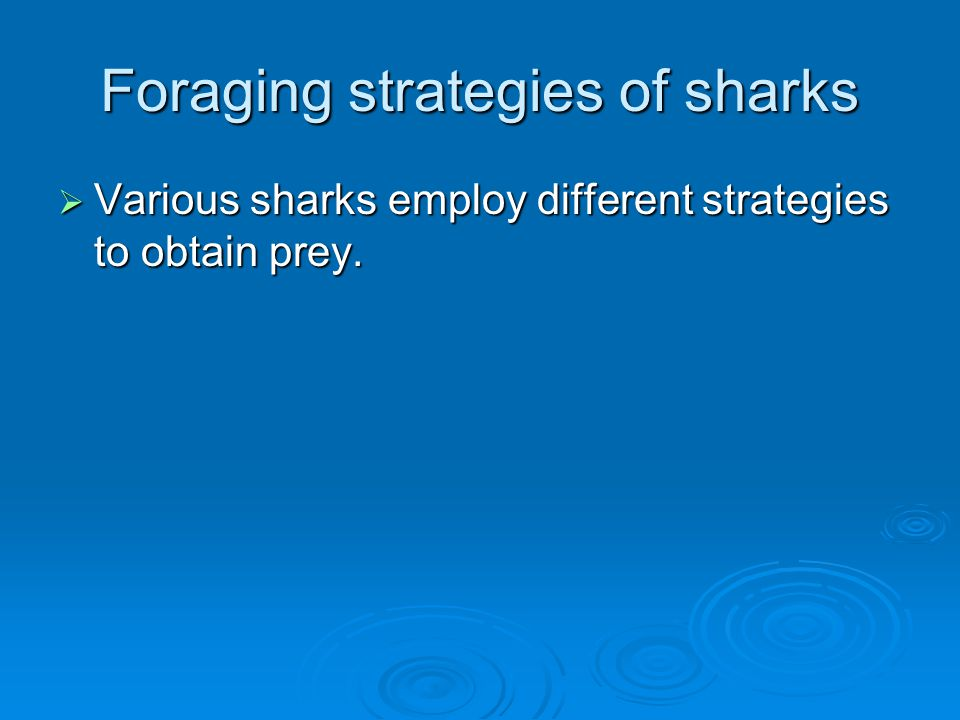Foraging strategies of sharks  Various sharks employ different strategies to obtain prey.