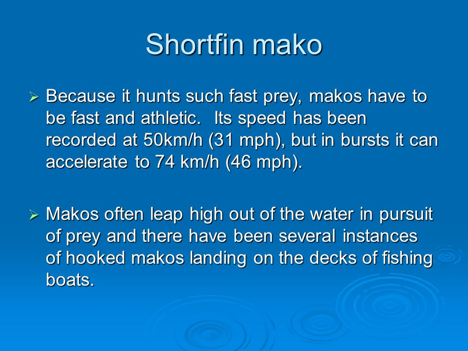 Shortfin mako  Because it hunts such fast prey, makos have to be fast and athletic. Its speed has been recorded at 50km/h (31 mph), but in bursts it