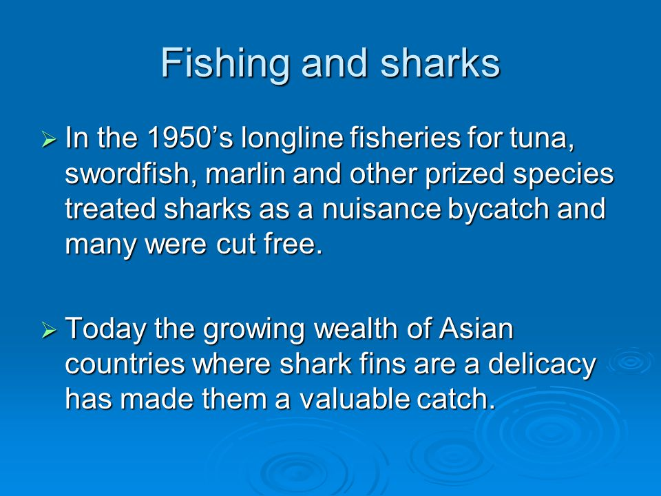 Fishing and sharks  In the 1950's longline fisheries for tuna, swordfish, marlin and other prized species treated sharks as a nuisance bycatch and ma