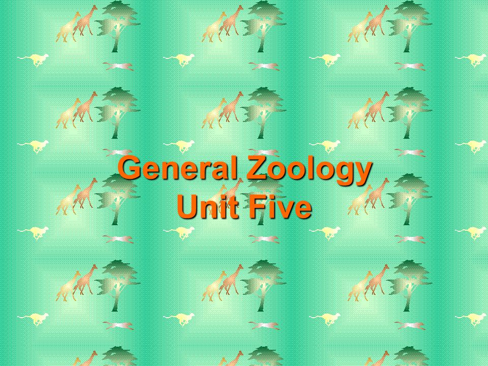 Fish Reproductive Adaptations Oviparous - egg laying Ovoviviparous - retention of eggs Viviparous – live birth All three methods are found in cartilaginous and bony fishes Cartilaginous fish are internal fertilizers while most bony fish are external fertilizers