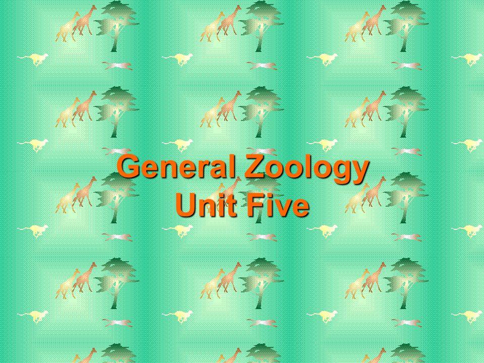 Amphibian Respiratory Strategies Gills