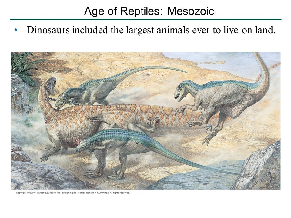 Dinosaurs included the largest animals ever to live on land. Age of Reptiles: Mesozoic