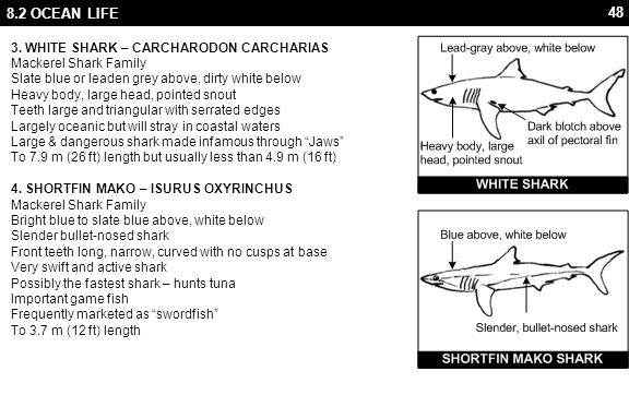 48 8.2 OCEAN LIFE 3. WHITE SHARK – CARCHARODON CARCHARIAS Mackerel Shark Family Slate blue or leaden grey above, dirty white below Heavy body, large h