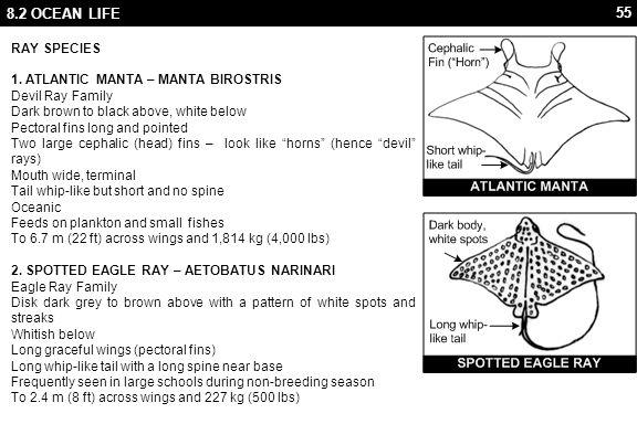 55 8.2 OCEAN LIFE RAY SPECIES 1. ATLANTIC MANTA – MANTA BIROSTRIS Devil Ray Family Dark brown to black above, white below Pectoral fins long and point