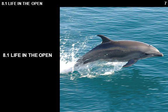 58 8.2 OCEAN LIFE 7.