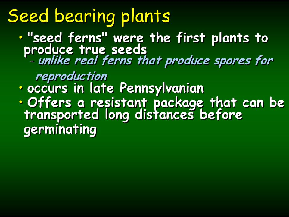 Seed bearing plants seed ferns were the first plants to produce true seeds - - unlike real ferns that produce spores for reproduction occurs in late Pennsylvanian Offers a resistant package that can be transported long distances before germinating