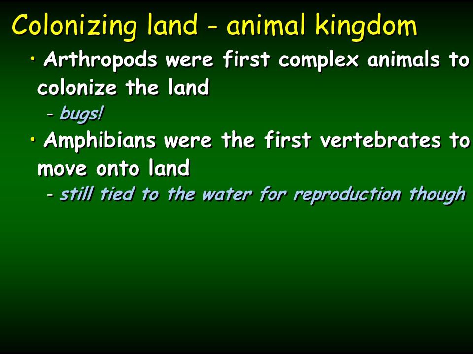 Colonizing land - animal kingdom Arthropods were first complex animals to colonize the land - - bugs.