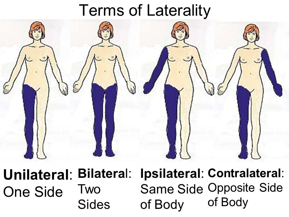 Terms of Laterality Unilateral: One Side Bilateral: Two Sides Ipsilateral: Same Side of Body Contralateral: Opposite Side of Body