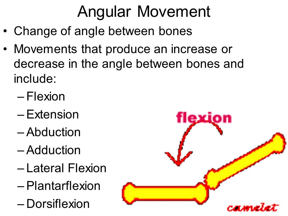 Angular Movement Change of angle between bones Movements that produce an increase or decrease in the angle between bones and include: –Flexion –Extens