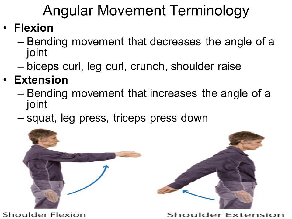 Angular Movement Terminology Flexion –Bending movement that decreases the angle of a joint –biceps curl, leg curl, crunch, shoulder raise Extension –B